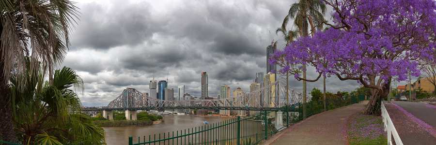 Brisbane_City_Jacaranda.jpg