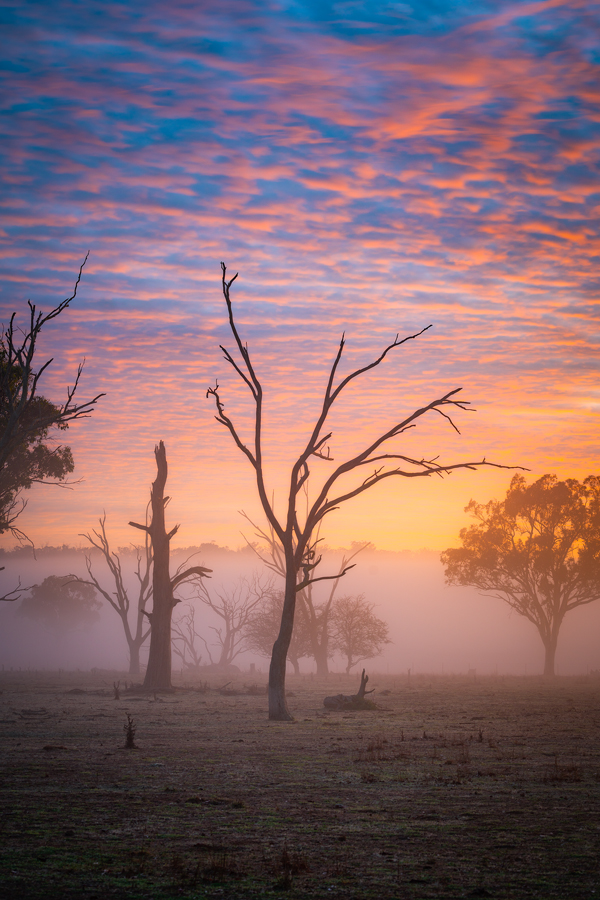 Sunrise_in_the_Mist900.jpg