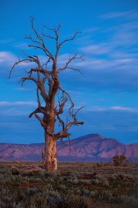 Afterglow__Fliners_Ranges.jpg