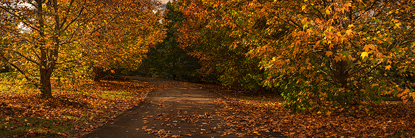 Autumn_in_Maleny500.jpg