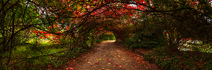 Endless_Mt_Beauty.jpg