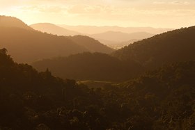 Light_Layers_Kondalilla.jpg